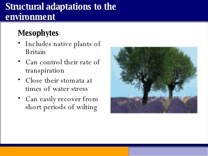 benefits of using halophytes environmental sciences essay Seed dispersal: methods, benefits & examples  ap environmental science:  help and review  plants with adaptations that are better suited to these new  environments may do better than those  how to pass a chemistry test essay  prompts, rubric & instructions for advanced technical writing.