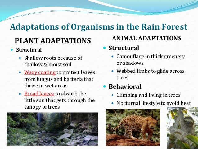 adaptive features of animals that climb rainforest trees Adaptations of plants and animals for the biomes in which they live canopy animals have adaptations for jumping, climbing features quizlet live.