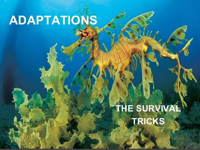 Plant+Survival+Adaptations Adaptations of animals and plants