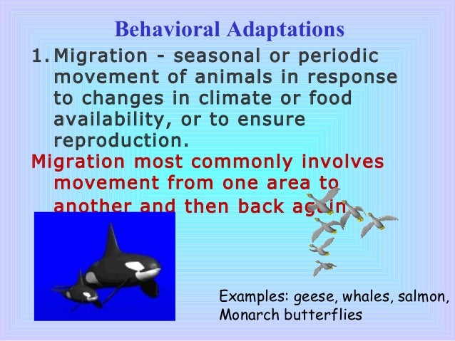 What Are Examples of Behavioral Adaptations?