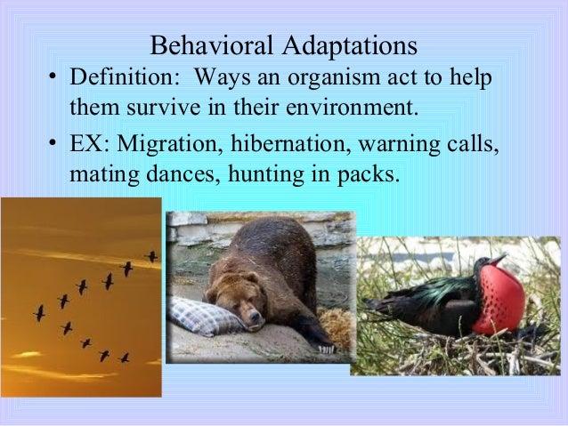 animal adaptation definition - photo #10