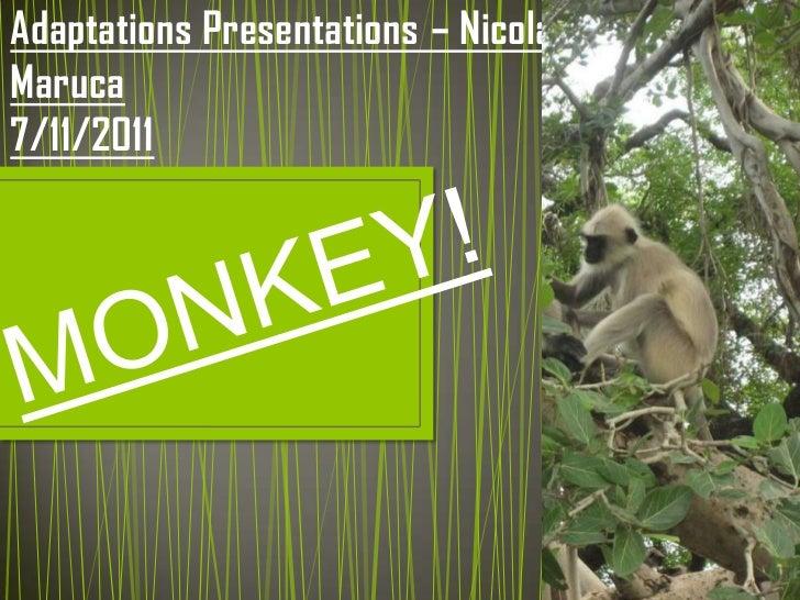 Adaptations presentations