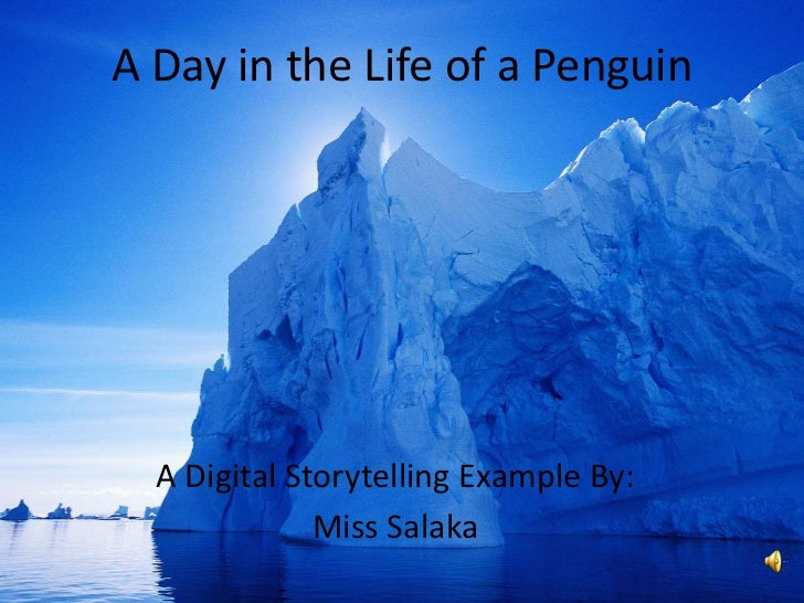 A Day in the Life of a Penguin