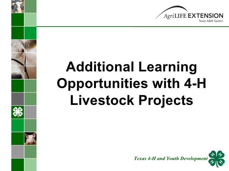 Additional Learning Opportunities with 4-H Livestock Projects Texas 4-H and Youth Development