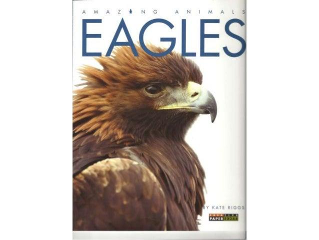Amerikaanse zeearend,    leeft in Amerika.Een adelaar is een roofvogel. Er zijn59 soorten adelaars. Adelaars levenop elk w...