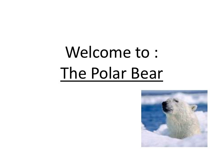 Welcome to : The Polar Bear<br />