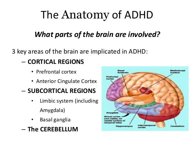 personal experience with kids affected with adhd Bringing life into focus several studies have shown that more than half of children with adhd will brody's experience is common for adults with adhd who.