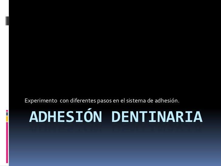 Adhesión dentinaria   experimento