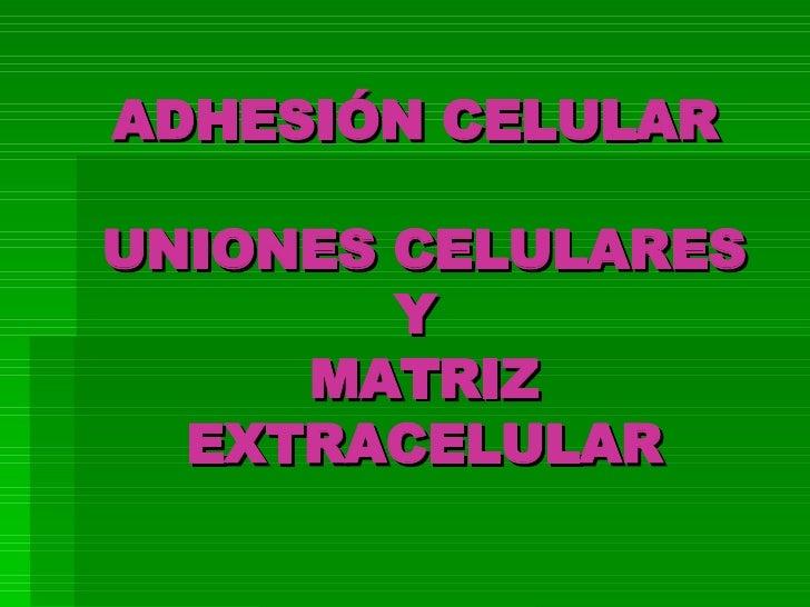 ADHESION CELULAR Y MATRIZ EXTRACELULAR
