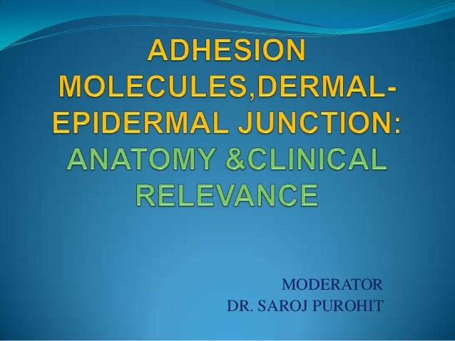 Adhesion molecules in skin  seminar (2)