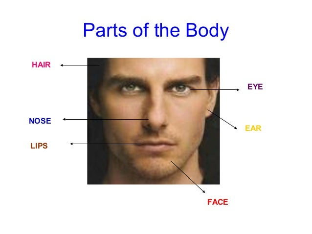 Human+Face+Parts+Names Human Face Parts Names Adjectives-describing-