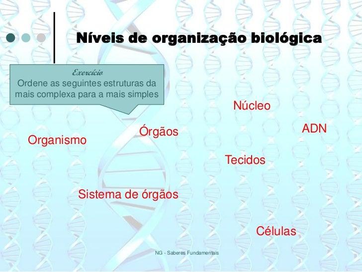 Níveis de organização biológica            ExercícioOrdene as seguintes estruturas damais complexa para a mais simples    ...