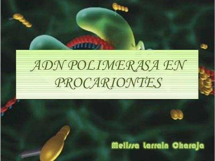 ADN POLIMERASA EN PROCARIONTES