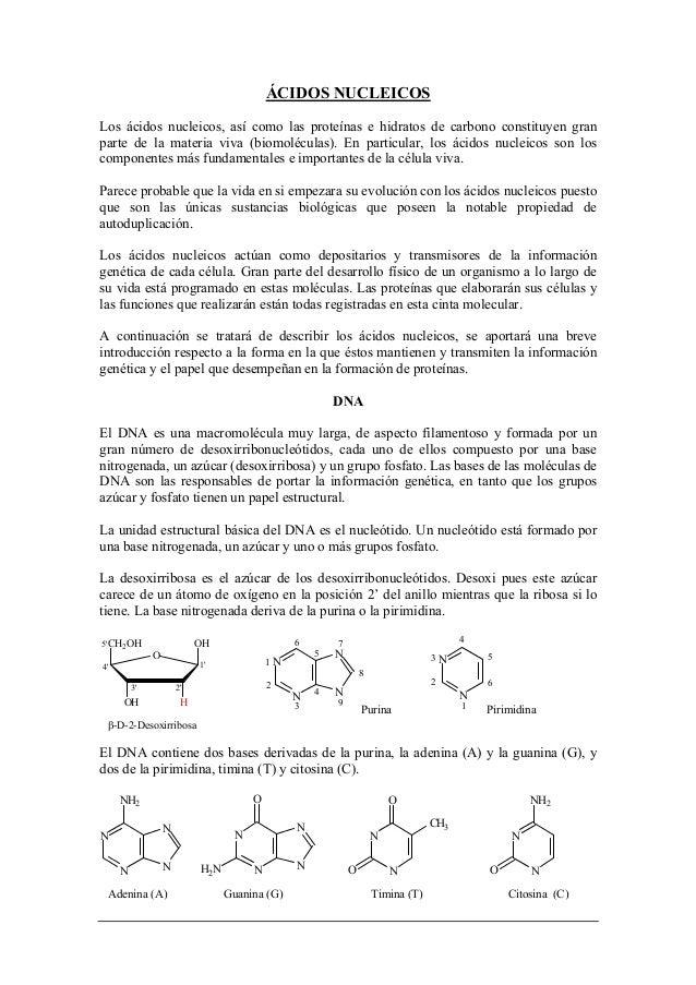 Bioquímica ÁCIDOS NUCLEICOS Los ácidos nucleicos, así como las proteínas e hidratos de carbono constituyen gran parte de l...