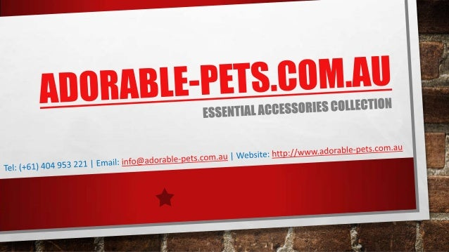 Adorable Pets Provide Dog toys, Cat toys and Bird toys in Australia