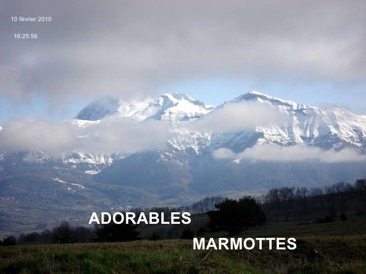 ADORABLES  MARMOTTES  10 février 2010 16:25:56