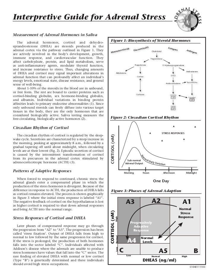 Adrenal Stress Paradigm