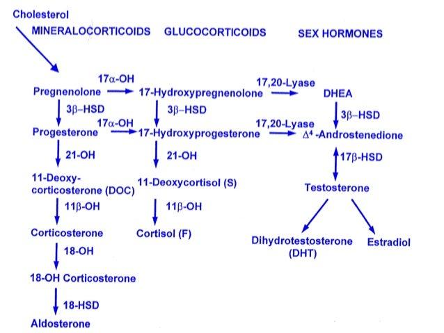 steroid 21 hydroxylase deficiency congenital adrenal hyperplasia