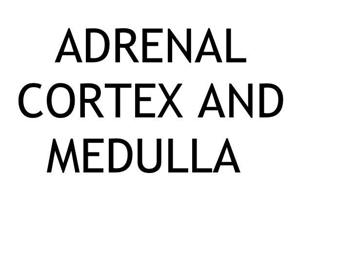 ADRENAL CORTEX AND MEDULLA