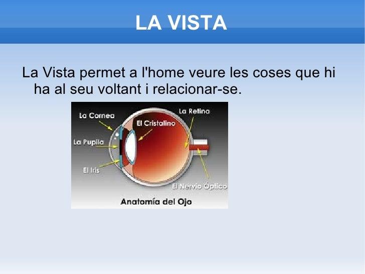LA VISTA <ul><li>La Vista permet a l'home veure les coses que hi ha al seu voltant i relacionar-se. </li></ul>