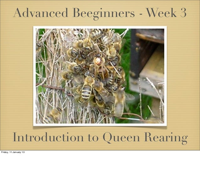 Advanced Beeginners - Week 3         Introduction to Queen RearingFriday, 11 January 13