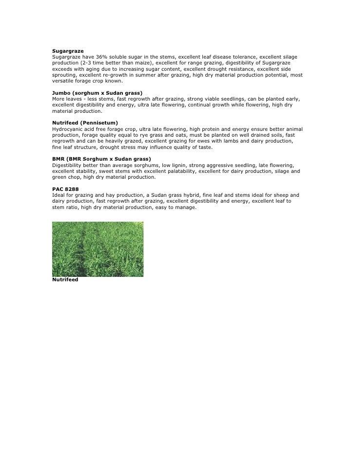 Sugargraze Sugargraze have 36% soluble sugar in the stems, excellent leaf disease tolerance, excellent silage production (...