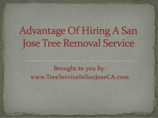 Advantage of Hiring a San Jose Tree Removal Service