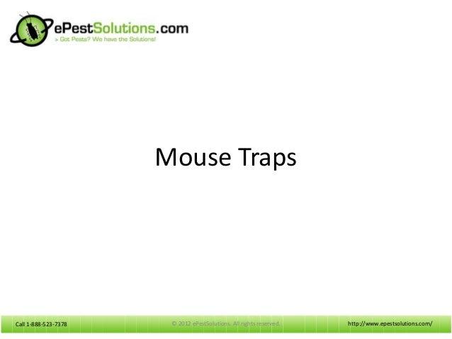 Advantages of Using Mouse Traps