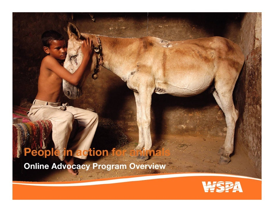 People in action for animals Online Advocacy Program Overview