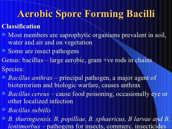 Aerobic Spore Forming Bacilli <ul><li>Classification </li></ul><ul><li>Most members are saprophytic organisms prevalent in...