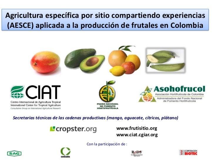 Agricultura específica por sitio compartiendo experiencias (AESCE) aplicada a la producción de frutales en Colombia<br />S...