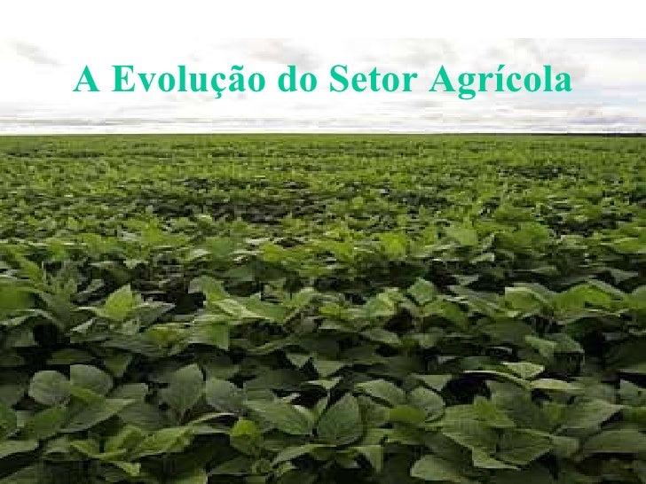A Evolução do Setor Agrícola