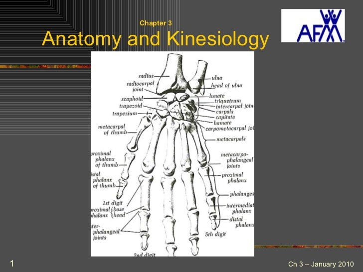 Chapter 3 Anatomy and Kinesiology