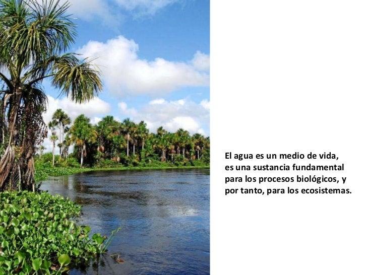 El agua es un medio de vida,es una sustancia fundamentalpara los procesos biológicos, ypor tanto, para los ecosistemas.