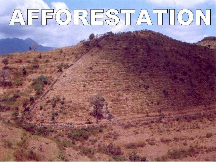 short essay on deforestation in india Essay on deforestation - deforestation is when forests are destroyed by cutting of trees and not replanteddeforestation when people change land to farms.