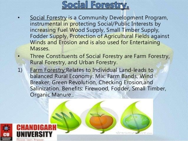 importance of afforestation Free essays on importance afforestation get help with your writing 1 through 30.