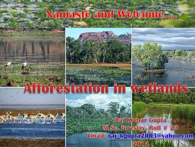 Afforestation in wetlands  raj kumar gupta