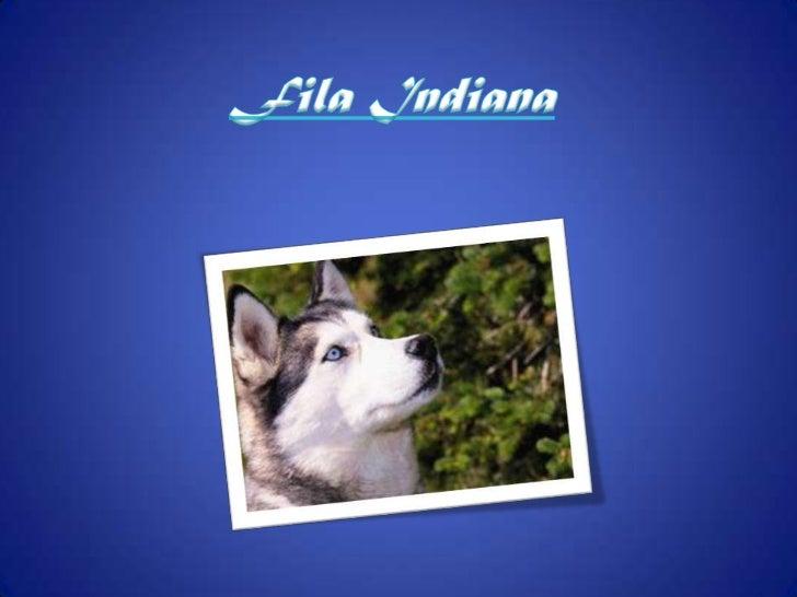 Fila Indiana<br />