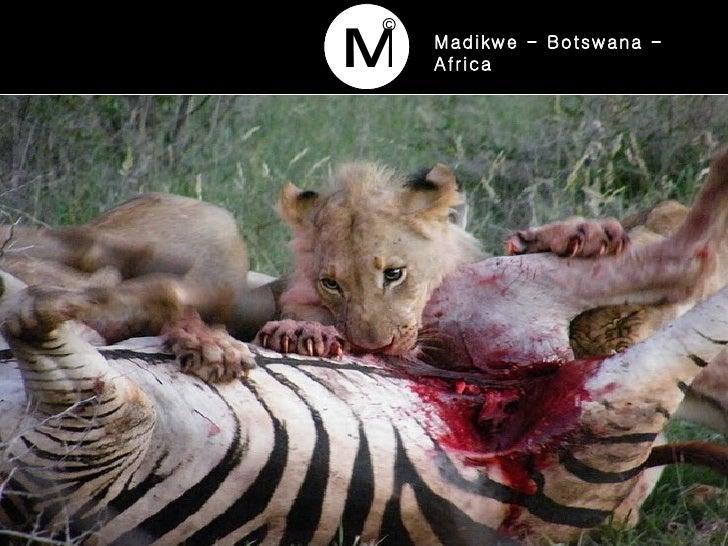 Madikwe - Botswana - Africa