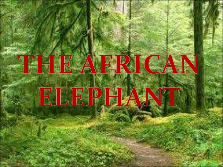 The African Elephant is the largest livingland animal. It is larger than the AsianElephant. These mammals have very strong...