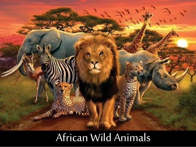 animals african wild