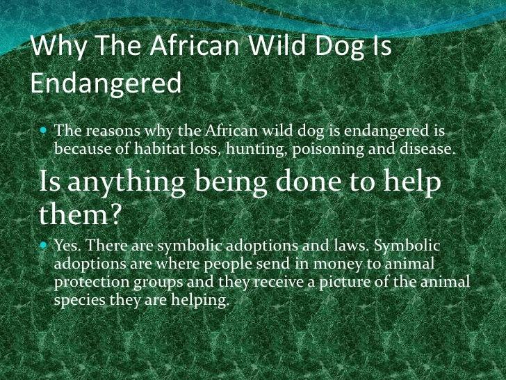 animals that live in the desert habitat