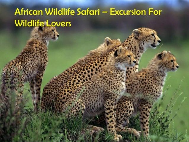 African Wildlife Safari – Excursion For Wildlife Lovers
