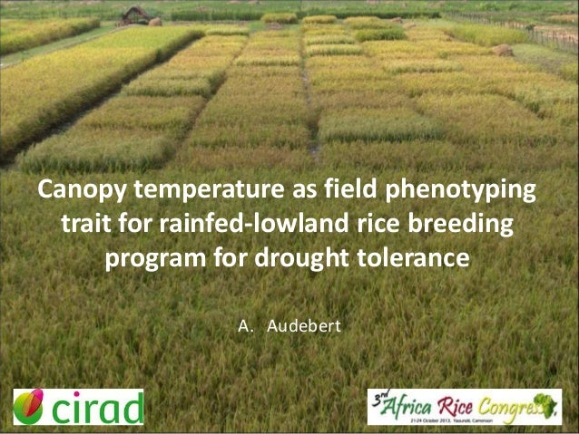 Canopy temperature as field phenotyping trait for rainfed-lowland rice breeding program for drought tolerance A. Audebert