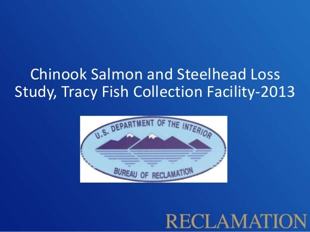 Chinook Salmon and Steelhead Loss Study, Tracy Fish Collection Facility 2013