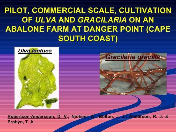 PILOT, COMMERCIAL SCALE, CULTIVATION OF ULVA AND GRACILARIA ON AN ABALONE FARM AT DANGER POINT (CAPE SOUTH COAST)