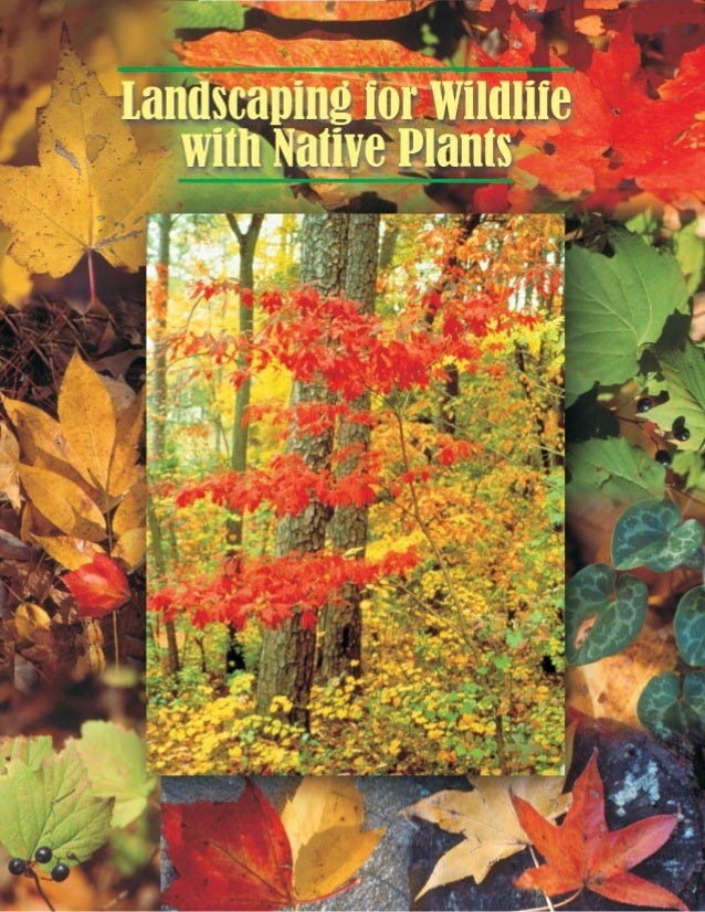 Landscaping for Wildlife With Native Plants - North Carolina State University