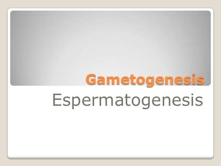 GametogenesisEspermatogenesis