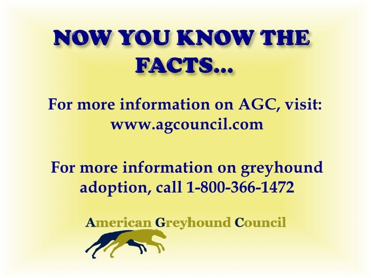 Greyhound 800 Phone Number on greyhound adoption