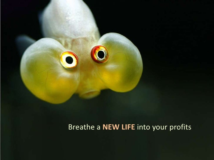 Breathe a NEW LIFE into your profits<br />
